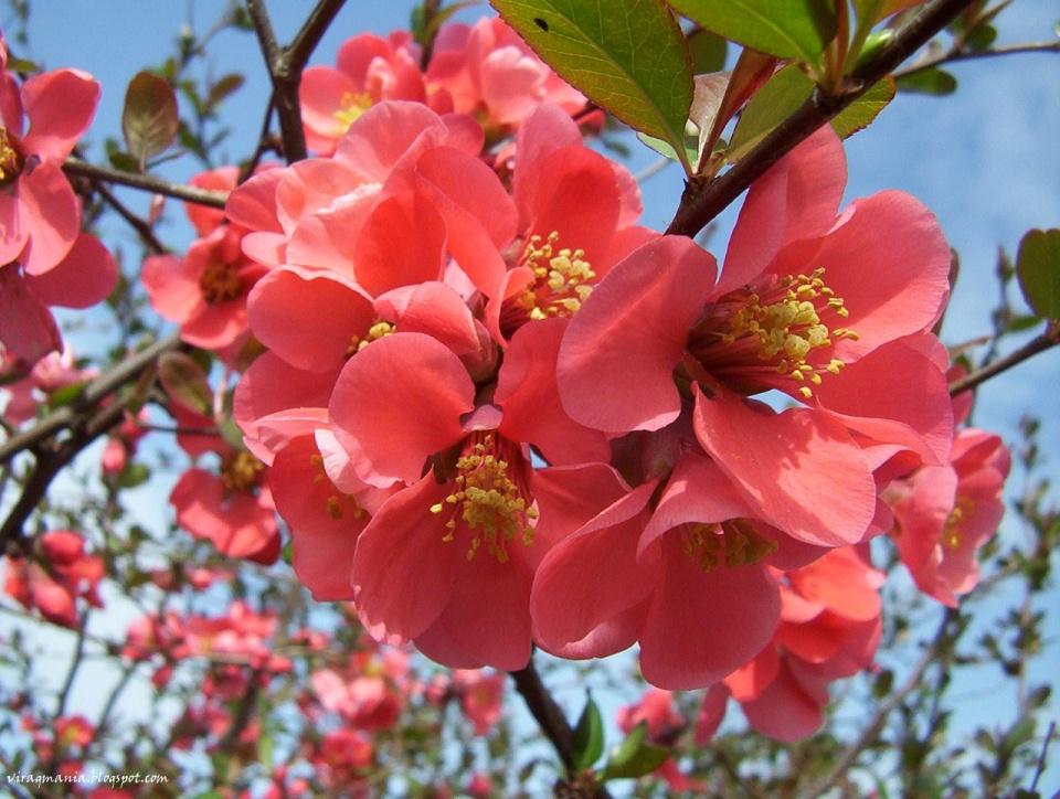 társkereső nő virágzás)